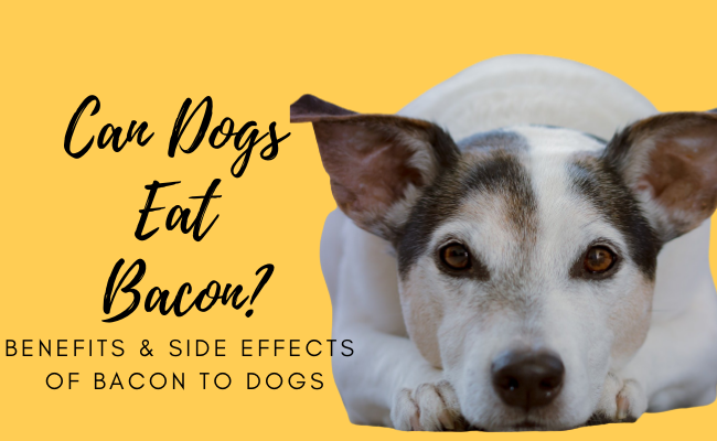 can dogs eat bacon | Can Dogs Have Bacon