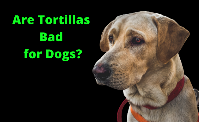 Are Tortillas Bad for Dogs