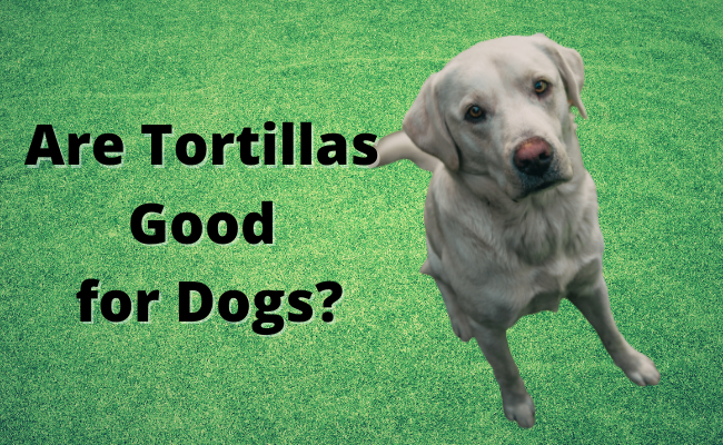 Are Tortillas Good for Dogs