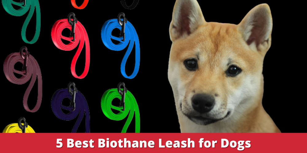 Best Biothane Leash for Dogs