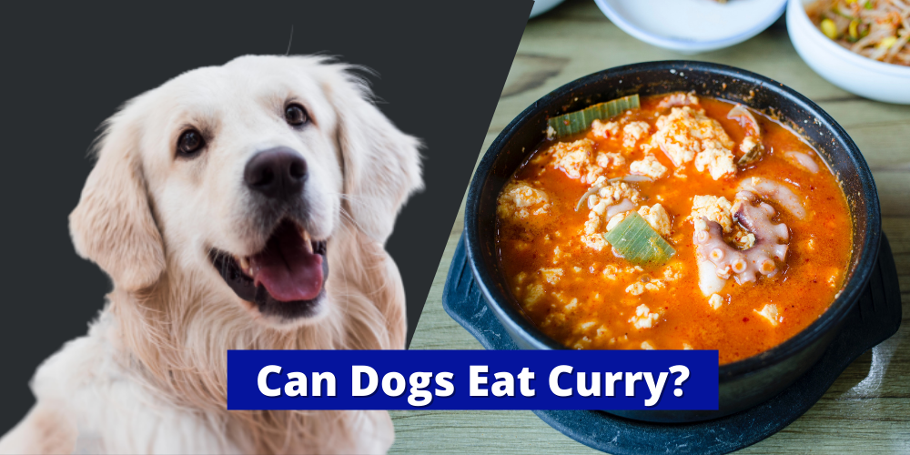 Can Dogs Eat Curry