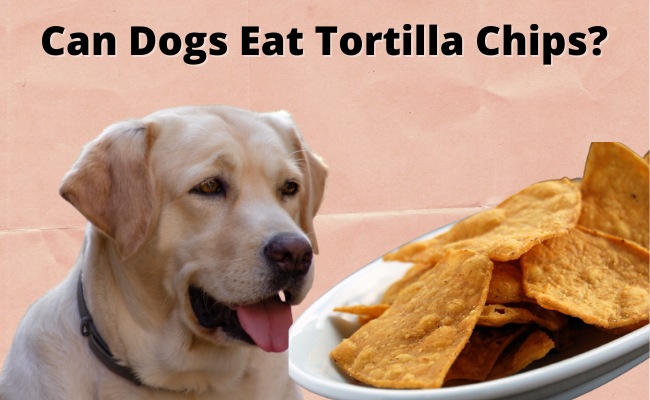Can Dogs Eat Tortilla Chips