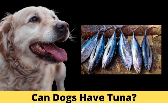 Can Dogs Have Tuna