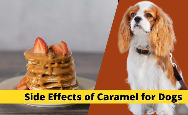 can dogs have caramel