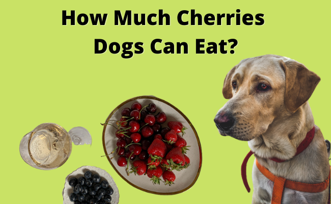 can dogs have cherries