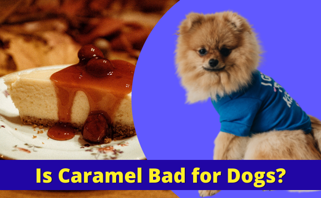 Is Caramel Bad for Dogs