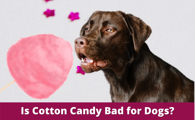 Is Cotton Candy Bad for Dogs