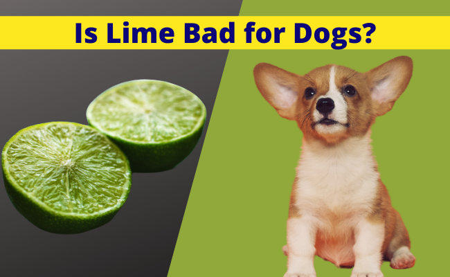 Is Lime Bad for Dogs