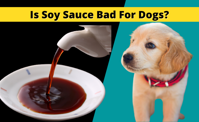 Is Soy Sauce Bad for Dogs