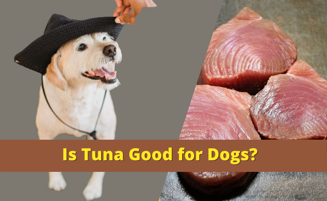 Is Tuna Good for Dogs
