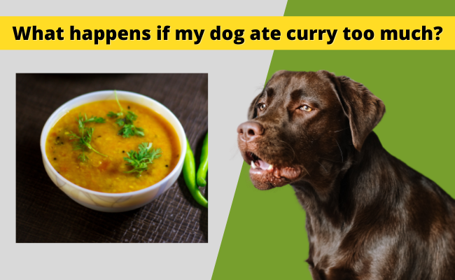 What happens if my dog ate curry too much
