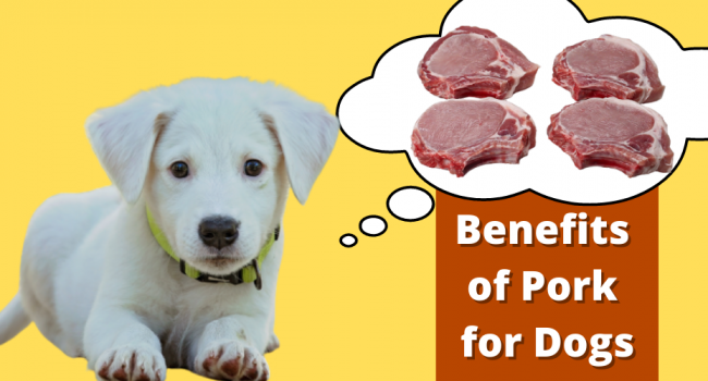 Benefits of Pork For Dogs
