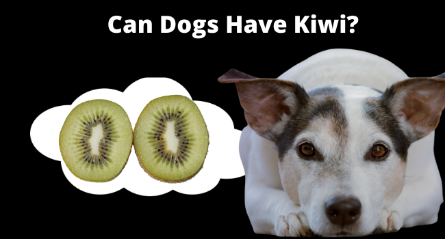 Can Dogs Eat Kiwi   Can Dogs Have Kiwi