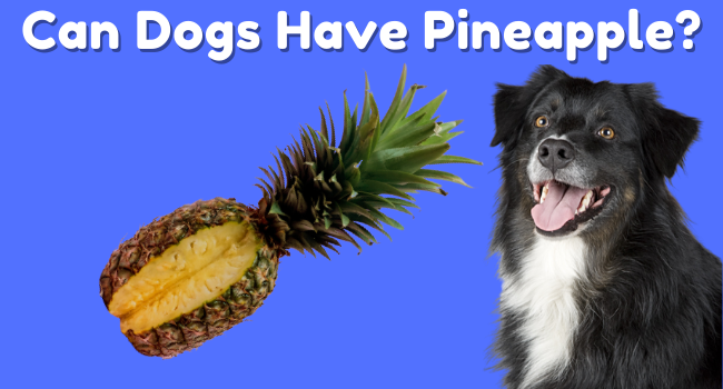 Can Dogs Eat Pineapple |Can Dogs Have Pineapple