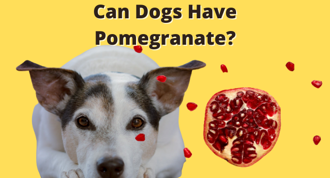 Can Dogs have pomegranates