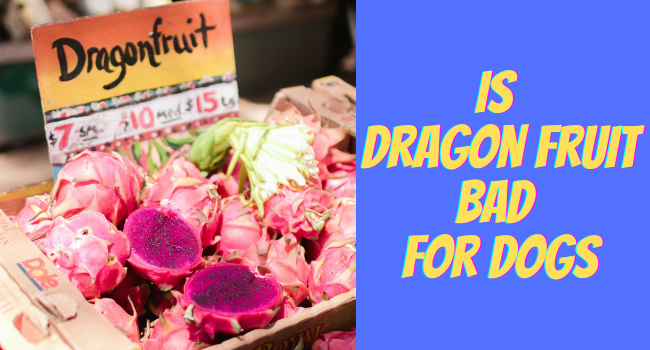 Is Dragon Fruit Bad For Dogs