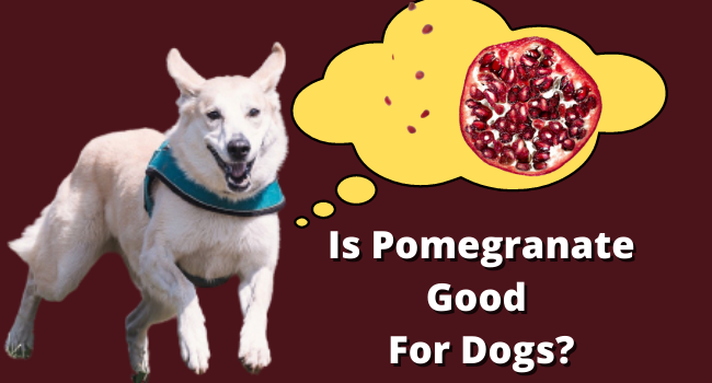 Is Pomegranate Good for Dogs