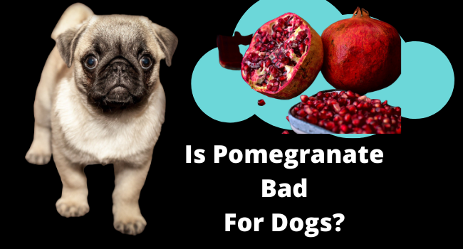 Is pomegranate Bad Dogs